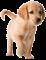 Afbeelding voor Puppies World 3D
