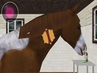 Borstel de manen van je paard om een nog mooiere uitstraling te geven.