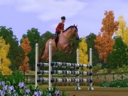 Leer je paard verschillende trucjes, en gebruik deze in wedstrijden!