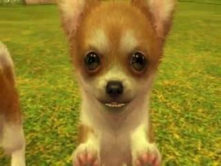 Word jij het baasje van deze lieve Chihuahua?
