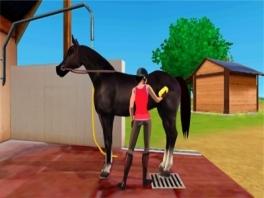 Natuurlijk moet je je paard ook verzorgen.