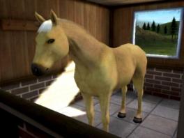 Je krijgt niet enkel kleine huisdieren over de vloer; zelfs paarden hebben je hulp nodig!
