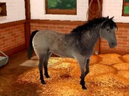 Dit paard kijkt me heel verleidelijk aan...