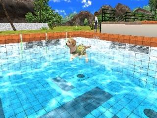 Eerst oefenen in het zwembad.