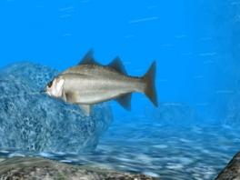 Vang zoveel mogelijk van dit soort... prachtige vissen.