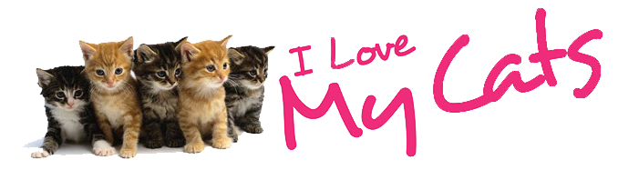 Banner I Love My Cats